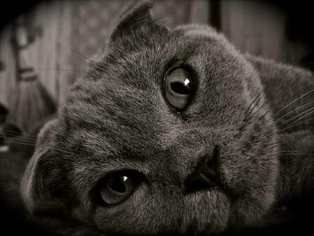 snoot: cat