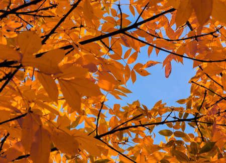 unusual: beautiful leaves unusual