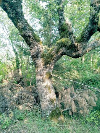 lovely moss tree Imagens