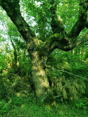 moss covered tree Imagens