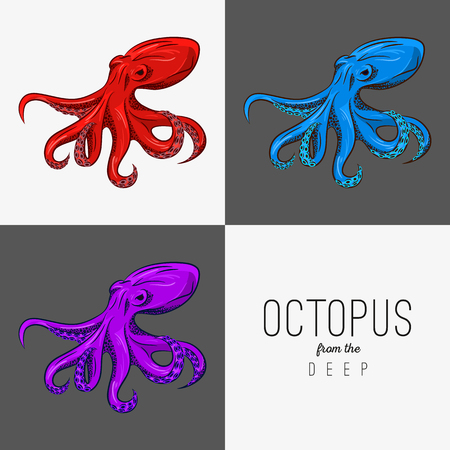 octopus: Vector drawing illustration of octopus with curling tentacles.
