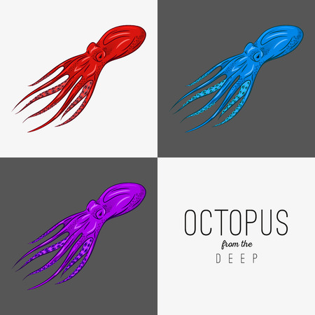 feeler: Vector drawing illustration of octopus with curling tentacles.