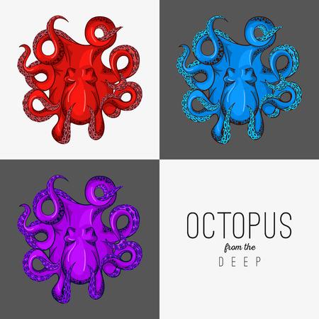 pulpo: Dibujo vectorial ilustración de pulpo con tentáculos que se encrespan.