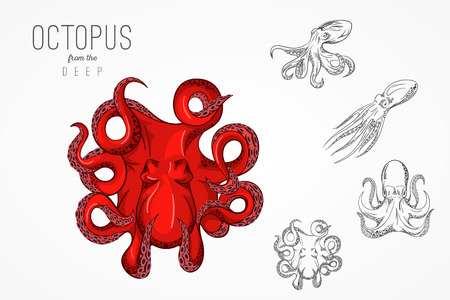 Template for logos, labels and emblems with outline silhouette of octopus. Vector illustration. Ilustrace