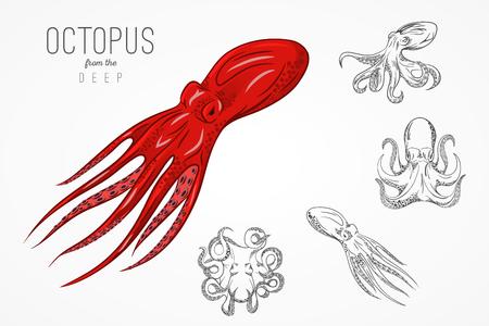 calamares: Plantilla para logotipos, etiquetas y emblemas con la silueta contorno de pulpo. Ilustración del vector.