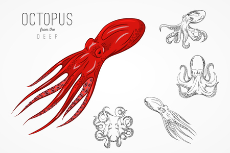 Template for logos, labels and emblems with outline silhouette of octopus. Vector illustration. 向量圖像