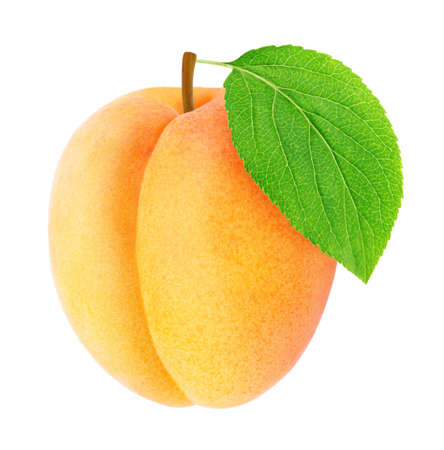 Ripe orange apricot with green leaf isolated