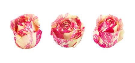 Set of bicolored roses. Full depth of field.