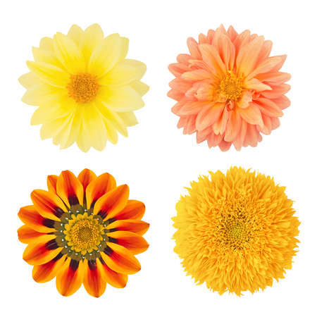 Set of flowers with dahlias, gazania and sunflower. As design elements. Stock Photo