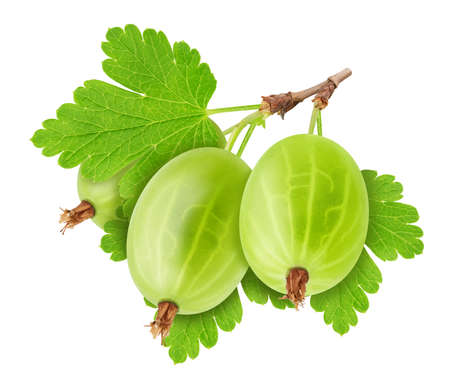 Twig of ripe sweet gooseberries with leaves isolated on white background. Composite image. Archivio Fotografico