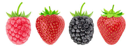 Multicolored collection of assortment of berries: strawberry, raspberry and blackberry isolated on a white background