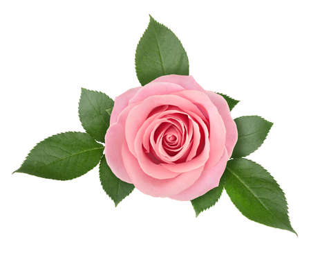 Rose flower arrangement isolated on a white background with clipping path. Banco de Imagens