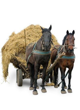 Pair of horses in cart with straw