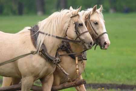 horse collar: Hard working peasants horses