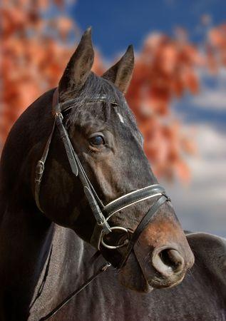 Autumnal horse portrait Stock Photo