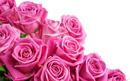 Pink roses isolated on white background Standard-Bild