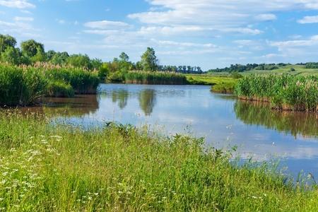 canne: Piccolo fiume di estate paesaggio con
