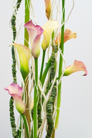 Calla flowers composition photo
