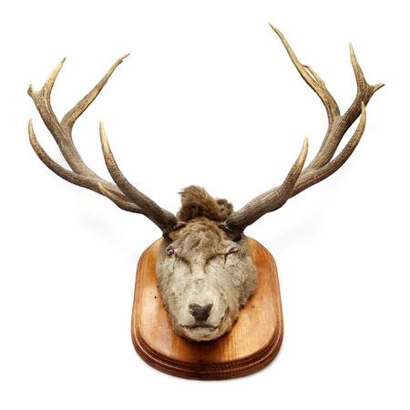 huge antlers: Vintage deer head isolated on white Stock Photo