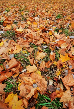 Close-up wide angle shot of fallen leaves photo