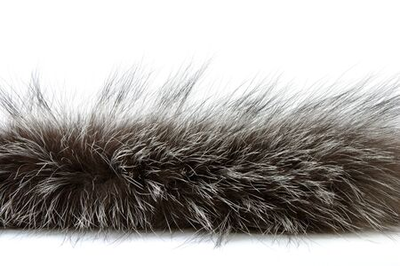 black boa: detailed shot of fur isolated