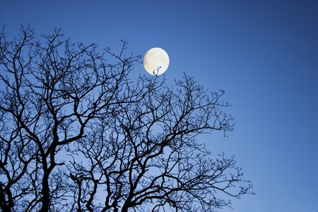 moonlit: Moon through winter branches Stock Photo