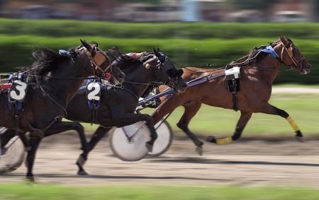harness: Horse  race
