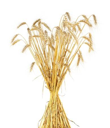 wheat sheaf isolated photo