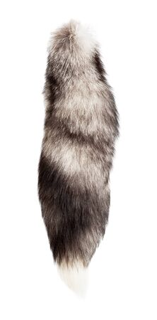 black fox: Silver fox tail isolated Stock Photo
