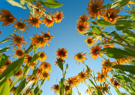 Yellow flowers over blue sky background Stock Photo - 15767467