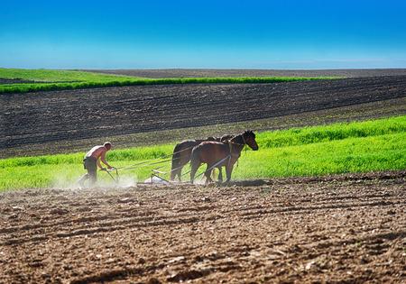 Farmer planting potato