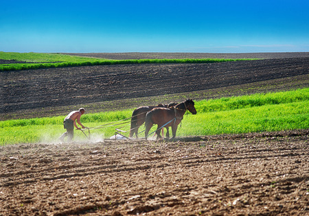 Farmer planting potato
