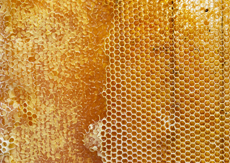Hive: honeycomb filled with honey texture