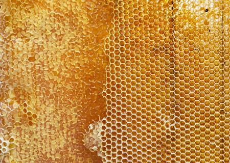 abeja: panal lleno de miel textura Foto de archivo