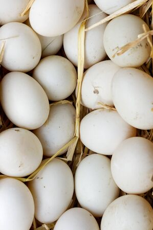 egg laying: A lot of eggs in straw