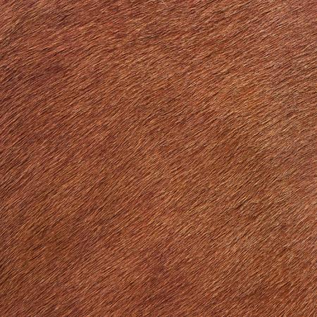 cow hide: Orange fur texture