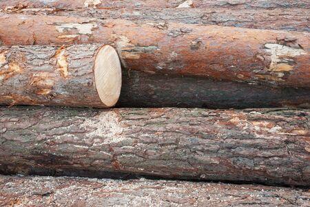 Timber logs texture
