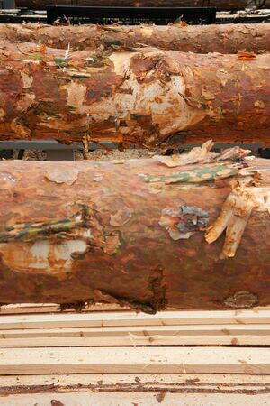 Logs and planks in sawmill