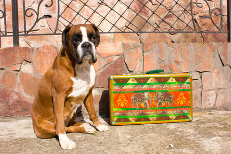 dog sitting near the colorful retro suitcase Stock Photo