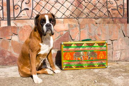 playfulness: dog sitting near the colorful retro suitcase Stock Photo