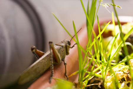 sitting on the ground: large locust sitting on the ground summer