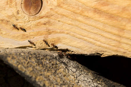 protozoa: ants go ranks on a wooden surface