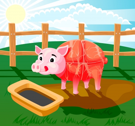 A piglet standing in the mud and drinking from trough  Picture has layers to easy edit