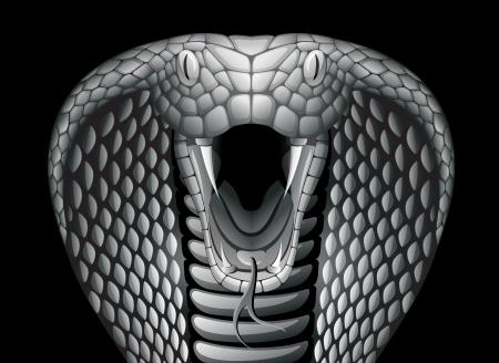 Cobra. EPS 10 Stock Vector - 20194212