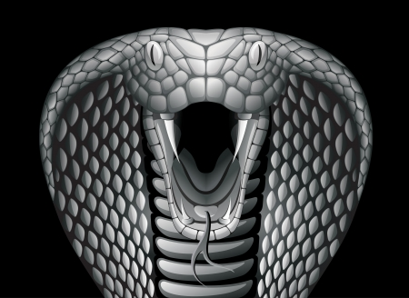 COBRA: Cobra. EPS 10 Illustration