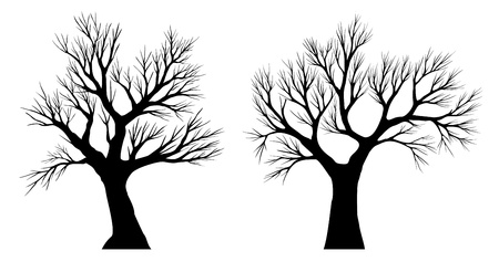 no lines: Silhouette of trees on white