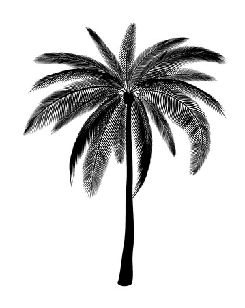 coconut tree: Silhouette of single palm