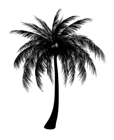 foliage frond: Silhouette of single palm