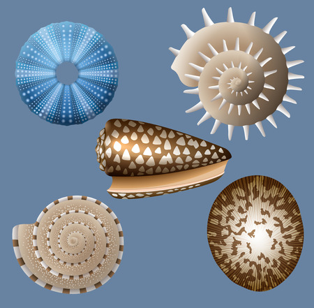 sea urchin: Set of seashells, EPS 10 contains transparency.