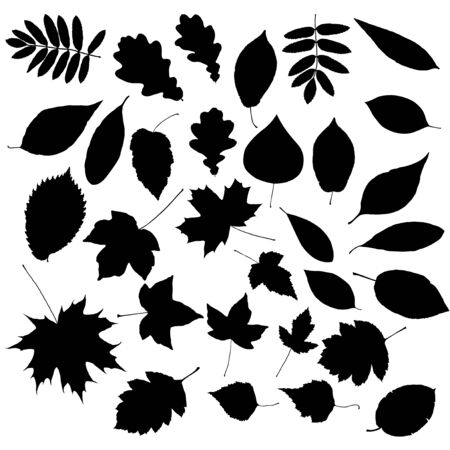 cottonwood  tree: Set of silhouettes of leafs Illustration